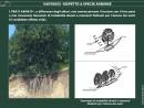 Vantaggi rispetto a specie arboree 4